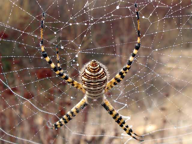 ★カマキリ VS 蜘蛛~どちらが勝ったか?見てみよう!(゚゚;)_a0028694_8104469.jpg