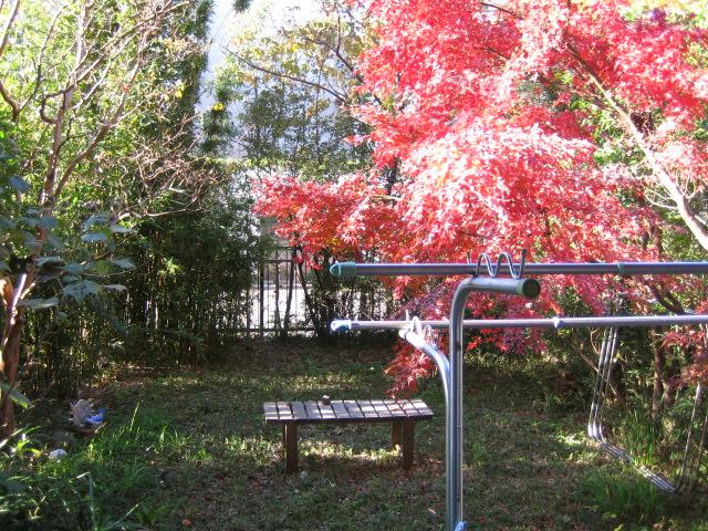 「庭の紅葉が色づきました。」(@自宅前庭)_f0064203_9353692.jpg