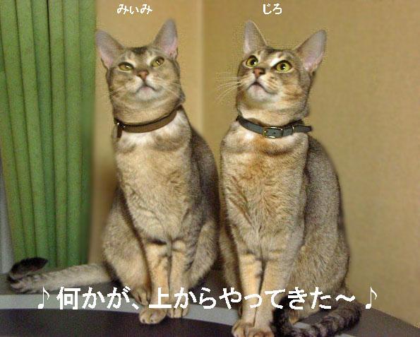 d0081025_20111996.jpg