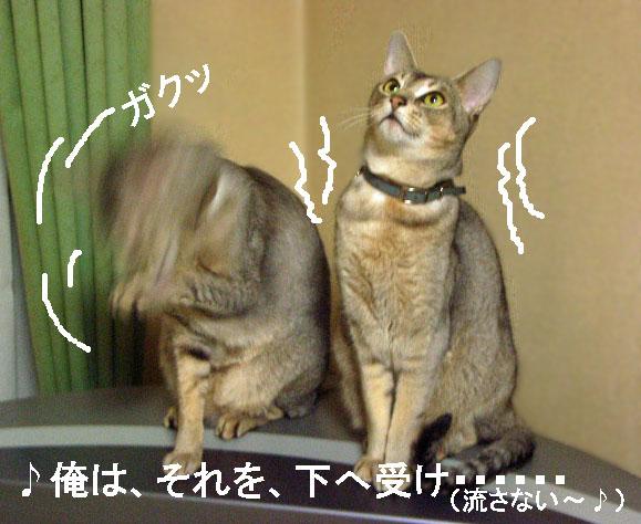 d0081025_20114368.jpg
