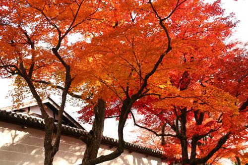 京都紅葉ウォーキング Ⅰ 曼殊院_d0055236_14112887.jpg