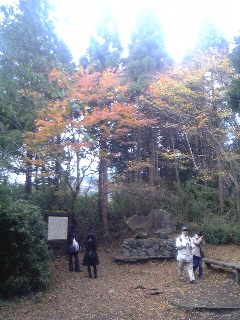 箱根旧街道の紅葉_c0131063_1311191.jpg