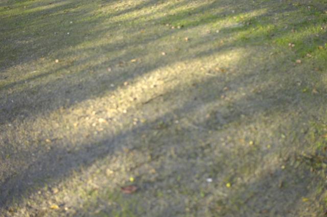 名古屋城のお堀外の大きな公園の地面です。所々雑草が生え緑に染まり木の陰が入り込んでます。確か夕暮れ前でしょうか。光の明るさを撮ろうとした一枚です。