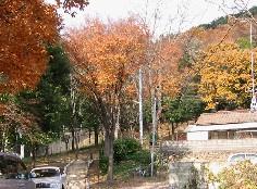 信夫山:養山登拝路口から_a0087378_7392742.jpg