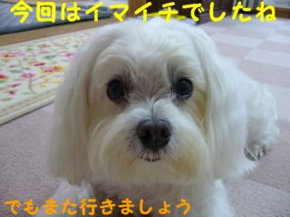 f0145192_20114944.jpg
