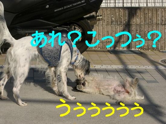 f0055395_05030100.jpg