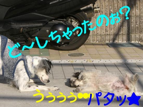 f0055395_0541880.jpg