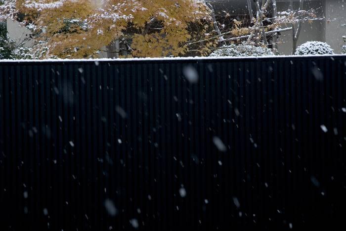 初雪-2_b0074098_75943.jpg
