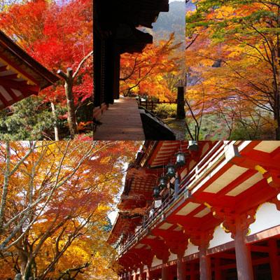秋のグラデーションをたっぷりと。(談山神社〜長谷寺)_f0122107_9361585.jpg