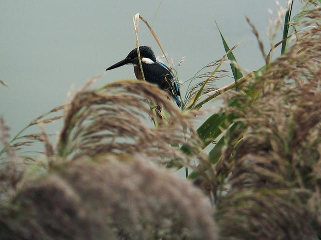 先日の鳥見から・・・_d0074828_235831100.jpg