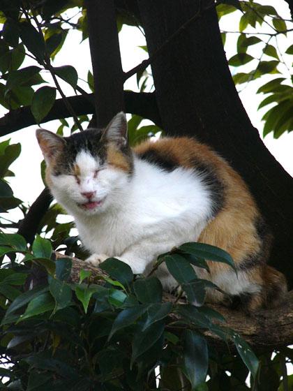 """""""grin like a Cheshire cat""""~チェシャ猫の様ににやにや笑う 2007/11/11-sun_f0031535_1136441.jpg"""