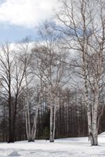 冬景色の、旅へ_b0053082_5392869.jpg