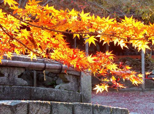 上賀茂神社ー紅葉終盤_e0048413_2326498.jpg