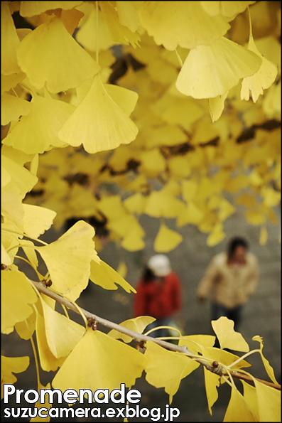 散歩道_f0100215_0392629.jpg