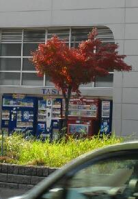 紅葉~ハートの樹~_e0095418_1685485.jpg