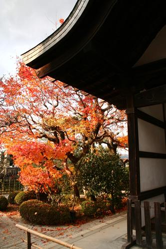 京都紅葉ウォーキング Ⅱ 圓光寺_d0055236_144086.jpg