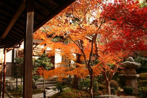 京都紅葉ウォーキング Ⅱ 圓光寺_d0055236_14435946.jpg
