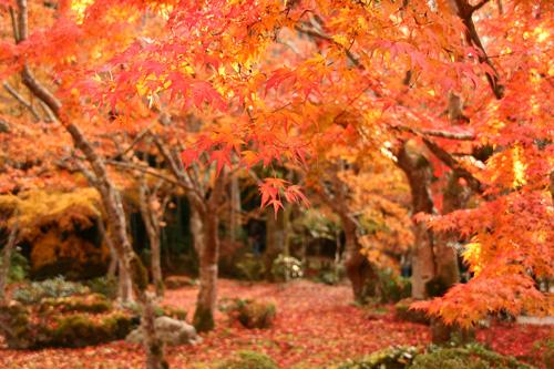 京都紅葉ウォーキング Ⅱ 圓光寺_d0055236_14454526.jpg