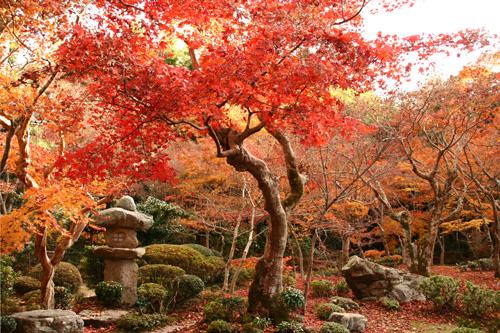 京都紅葉ウォーキング Ⅱ 圓光寺_d0055236_1445781.jpg