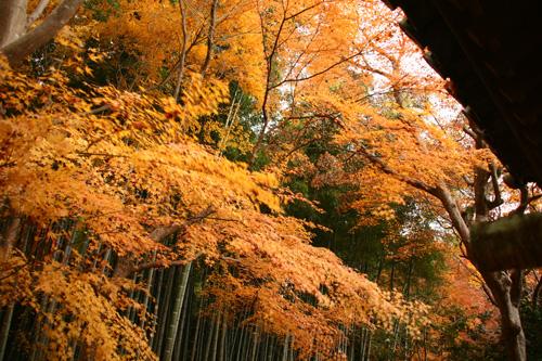 京都紅葉ウォーキング Ⅱ 圓光寺_d0055236_144718.jpg