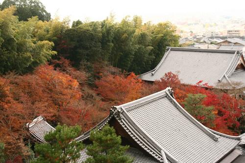 京都紅葉ウォーキング Ⅱ 圓光寺_d0055236_14472863.jpg