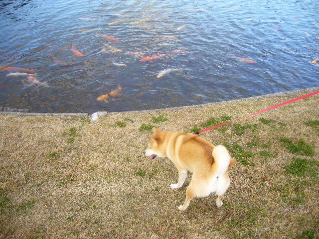 2007年12月5日(水)シロン振り、シロ君!_f0060461_19432995.jpg