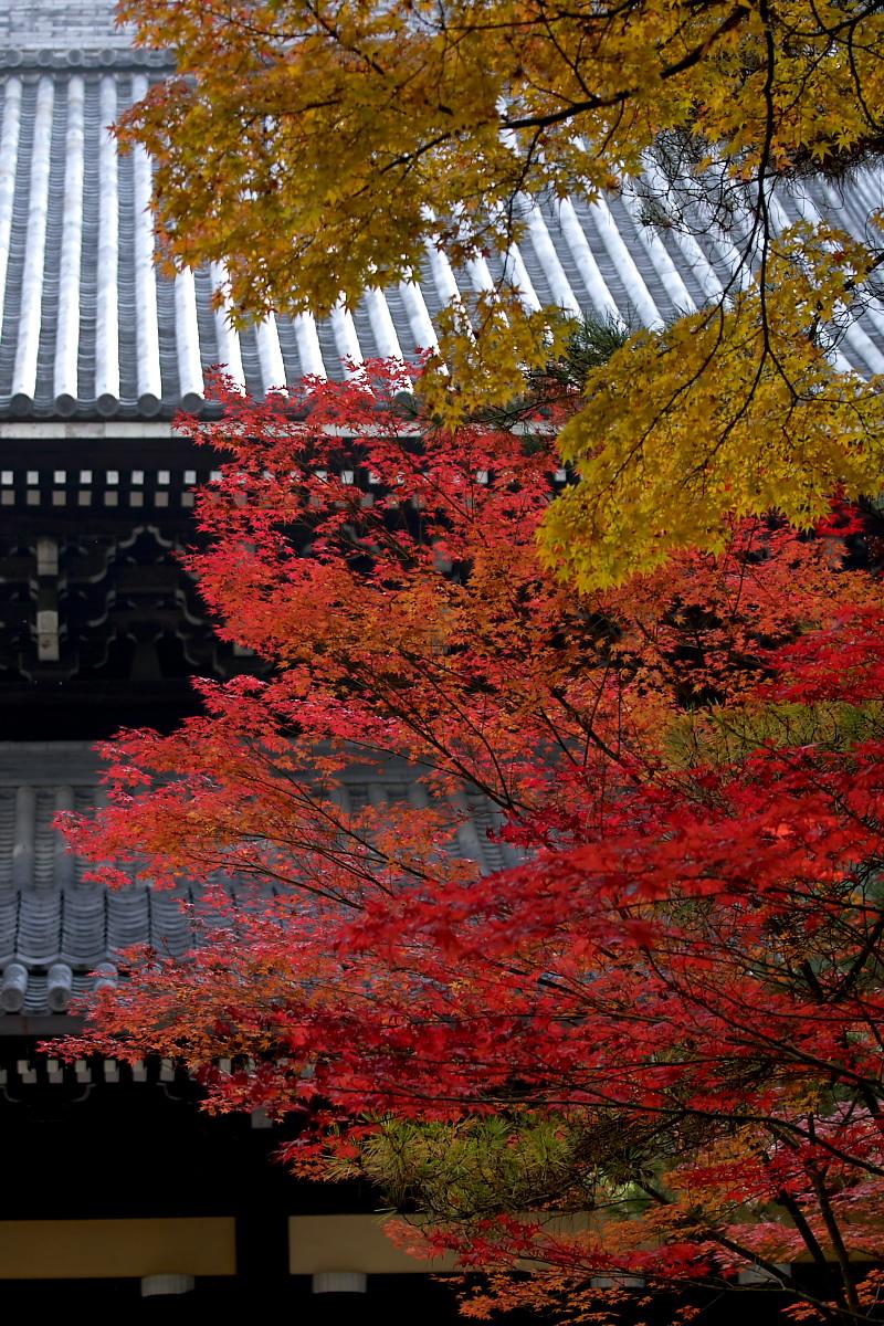 紅葉 2007 <南禅寺> 3_f0021869_22125475.jpg