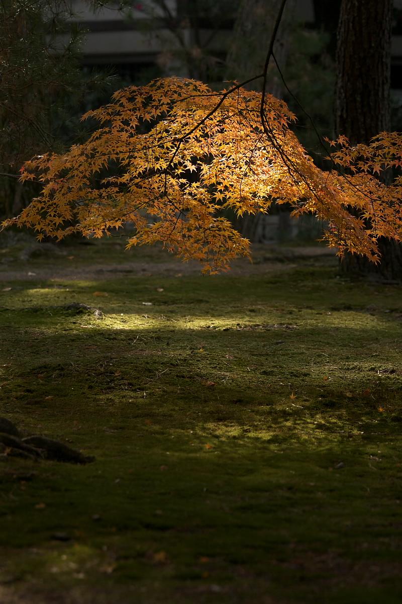 紅葉 2007 <南禅寺> 3_f0021869_22134143.jpg