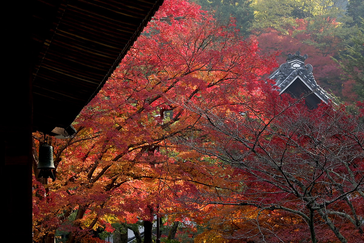 紅葉 2007 <南禅寺> 3_f0021869_22181086.jpg