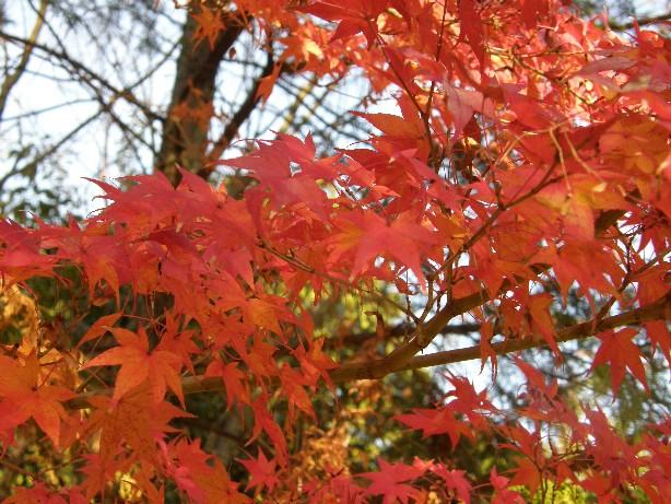 京都のもみじ_f0128542_23263885.jpg