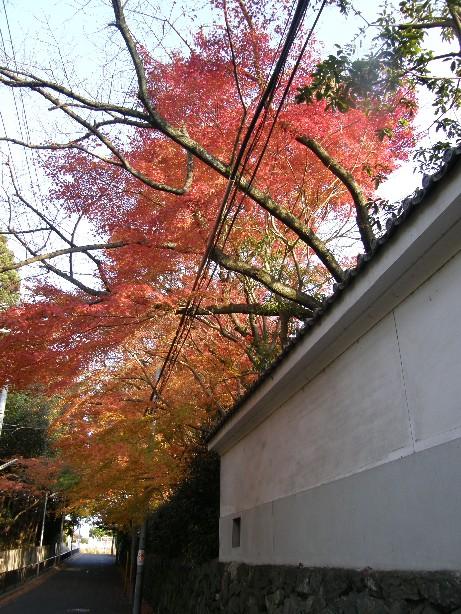 京都のもみじ_f0128542_23284382.jpg
