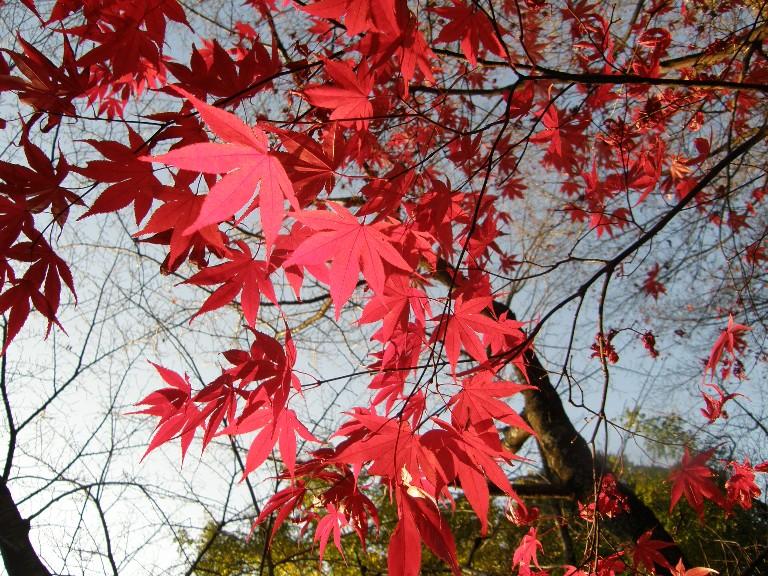 京都のもみじ_f0128542_23324470.jpg
