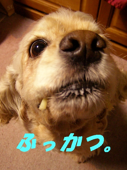 b0067012_2251296.jpg