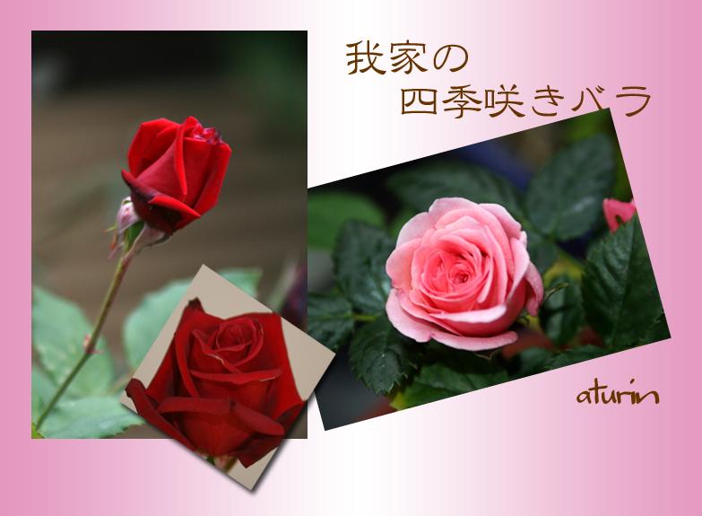 d0025414_16464973.jpg