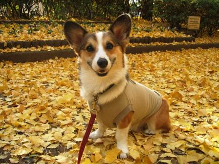 黄色い絨毯 ~城北中央公園_f0155118_21103627.jpg