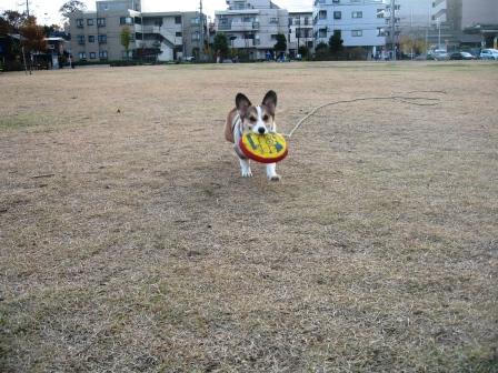 黄色い絨毯 ~城北中央公園_f0155118_21203027.jpg
