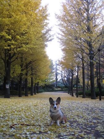 黄色い絨毯 ~城北中央公園_f0155118_21253399.jpg