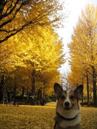 黄色い絨毯 ~城北中央公園_f0155118_2128141.jpg