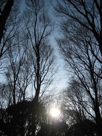 森の客間_c0107829_11575929.jpg