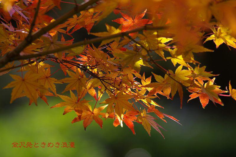 紅葉の兼六園 霞ヶ池周辺_d0043136_17514563.jpg