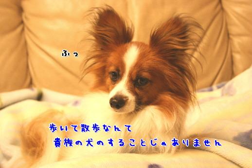 d0013149_1113040.jpg