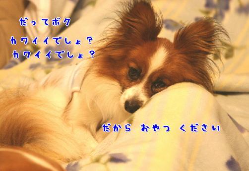d0013149_1201459.jpg
