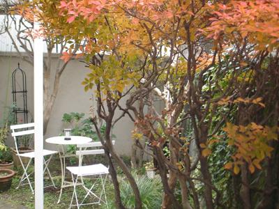 紅葉の下に、新装カフェコーナー_e0044855_0225181.jpg