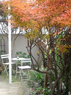 紅葉の下に、新装カフェコーナー_e0044855_028632.jpg