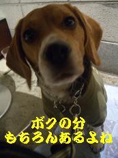 b0098660_23467100.jpg