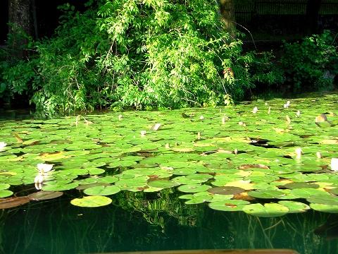 3日目(8/24):スロヴェニア アルプスの瞳「ブレッド湖」(1)_a0039199_23193249.jpg