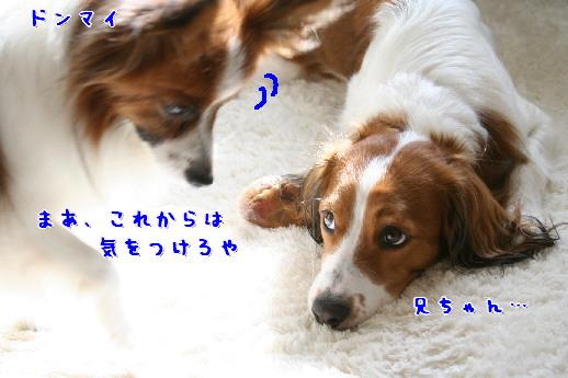 d0013149_0115143.jpg