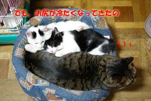 a0064067_029833.jpg