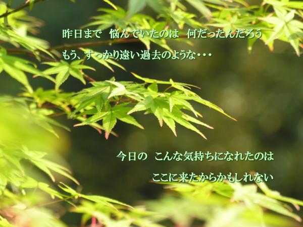 e0118974_156655.jpg