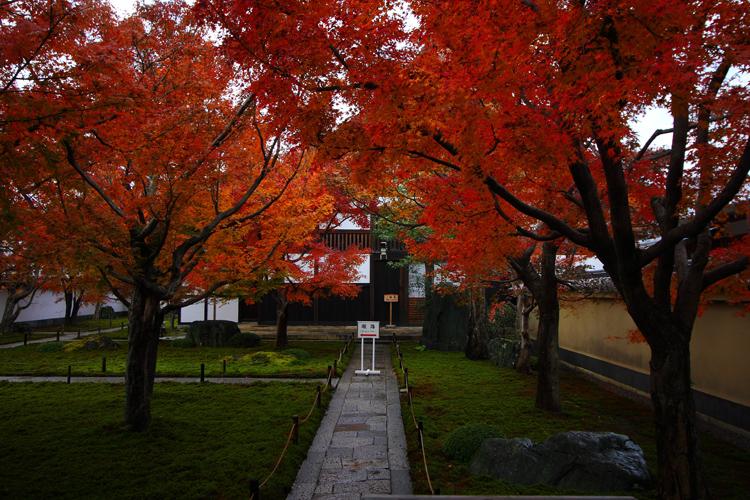 黄梅院(大徳寺塔頭)_e0051888_1751435.jpg